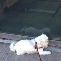 Maggie: Dog Door'n it…